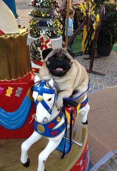 Carrousel Pug