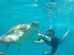On the island of Barbados, swimming with turtles is a pleasant adventure for you and the family.