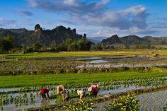 Vang Vieng Planters - Vang Vieng, Vientiane