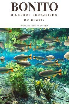 Se você ama natureza, paisagens verdes, ar puro, animais, trilhas, esportes radicais e ter contato direto com a fauna e flora, Bonito com certeza é o destino ideal para você. Com certeza, Bonito é o melhor ecoturismo do Brasil.