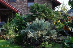 Garten 2011 -Exoten und Palmen Claus Willich