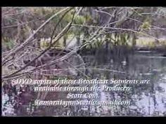 Endangered Species of the World - Florida Wood Stork