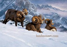 Commanding View Sheep Paintings, Wildlife Paintings, Wildlife Art, North American Animals, Nature Hunt, Big Horn Sheep, Nature Artists, Feather Painting, Animals And Pets