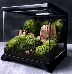 LAST ONE Desktop Terrarium Scene with Live Moss by DoodleBirdie