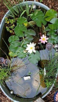 Small Water Gardens, Indoor Water Garden, Indoor Water Fountains, Small Garden Ponds, Small Ponds, Indoor Gardening, Organic Gardening, Container Pond, Container Water Gardens