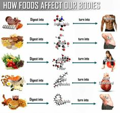 how foods affect our bodies  Advertisement:    Visited (7872) times!  Related Posts:        Calories and FoodCalories and Food      16 Healthiest Foods Ever16 Healthiest Foods Ever      Stress and YouStress and You      Top 10 Detoxifying FoodsTop 10 Detoxifying Foods      10 Foods That Burn Belly Fat10 Foods That Burn Belly Fat    All-Time Favorite Posts:  Why Bother Being Good? March...Why Bother Being Good? March...Why Bother Being Good? March 22, 2013 Everyday the newspaper tells the…