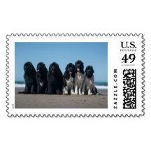 Newfoundland dog family postage stamp