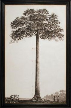 John Muir Tribute Tree | Natural Curiosities, recently used by Lauren Liess of Pure Style Home