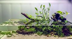 Favourites: Nano paludarium by Charo Charo An incredible little paludarium that is kept outside during summer and indoors in cold nights. I had the pleasure to see it live, and it is completely lovely. Congratulations Charo, from El Acuario Gallego,. Aquarium Terrarium, Home Aquarium, Aquarium Design, Aquarium Fish Tank, Planted Aquarium, Aquascaping, Vivarium, Nano Cube, Indoor Water Garden