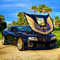 Pontiac Trans Am - the Bandit car My Dream Car, Dream Cars, Chevy, Chevrolet, Smokey And The Bandit, Pontiac Cars, Pontiac Firebird Trans Am, Sweet Cars, Us Cars