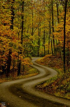 tulipnight: Autumn Road by konrad_photography on Flickr.