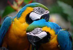 Google Image Result for http://www.brackenbird.com/wp-content/uploads/2011/11/colorful_parrots39.jpg