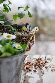 •(★)• Spring Sign, Spring Has Sprung, Beautiful Birds, Simply Beautiful, Beautiful Things, Spring Garden, Bird Houses, Backyard Landscaping, Pet Birds