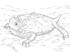 Realistic Texas Horned Lizard Coloring Page From Horned Lizard Category.  Select From 20946 Printable Crafts