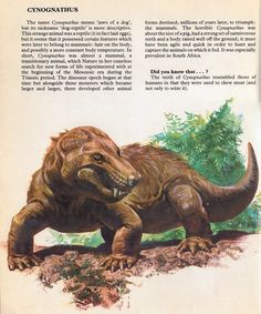 Love in the Time of Chasmosaurs: Vintage Dinosaur Art: Private Lives of Animals: Prehistoric Animals - Part 2 Prehistoric Wildlife, Prehistoric Dinosaurs, Prehistoric World, Prehistoric Creatures, Prehistoric Timeline, Extinct Animals, Rare Animals, Dinosaur Illustration, Dinosaur Art