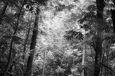 Steamy Forest - b/w - Decoration Murale & Papier Peint Photo - Photowall