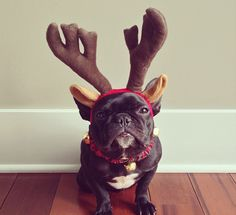 Trotter the bulldog gets all dressed up, becomes Instagram sensation