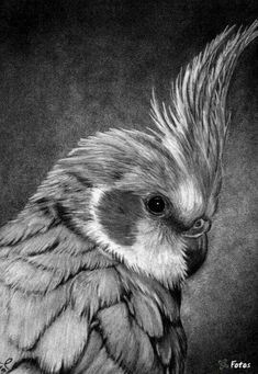 use of hatching is ineresting in creating a texture that is life like. by adding light and dark areas in the drawing it creates a more realistic drawing. by ...