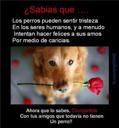 Los perros pueden sentir tristeza en los seres humanos y a menudo intentan hacer felices a sus amos por medio de caricias.