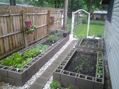 Veggies growing.  Corn in the back right bed with onions in the holes.  Spinach in the front right bed with onions, carrots  green beans in the holes.  Left bed has lettuce, peppers, celery, carrots, cabbage & tomatoes.  In the holes on the left are mustard greens, cucumbers, cantaloupe, watermelon and sunflowers.