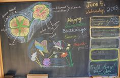 Waldorf ~ 5th grade ~ Botany ~ Parts of Flower ~ chalkboard drawing