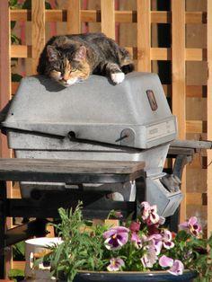 Barbecue/cat bed! 8th Annual Canada's Worst Barbecue Contestant! #CanadasWorstBarbecue