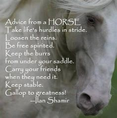 Advice from a HORSE, I'm printing this for my horse girl Isabelle! Pretty Horses, Horse Love, Beautiful Horses, Majestic Horse, Equine Quotes, Equestrian Quotes, Equestrian Problems, Yorkies, Inspirational Horse Quotes