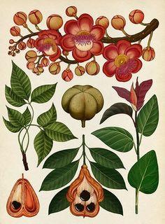 Botanicum - Tropical Trees