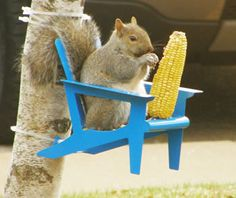 Adirondack Chair Squirrel Feeder -- Get squirrels their own feeders, and maybe they'll leave your bird feeders alone!