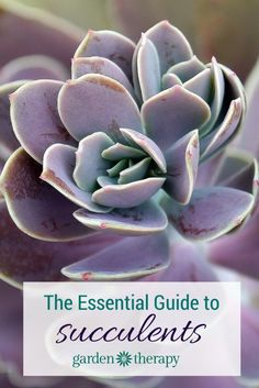 The Essential Guide to Growing Happy + Healthy Succulents