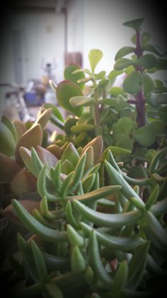 Succulents Succulents, Plants, Succulent Plants, Planters, Plant, Planting