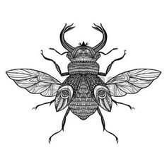 zentangle: Bug decorativo Boceto dibujado a mano con el ornamento ilustración vectorial negro