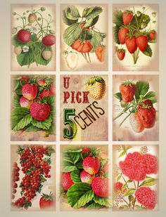 Vintage Labels gorgeous free printable tags and scrapbooking images: Vintage Strawberries and berries, u pick, red Free Printable Tags, Printable Letters, Free Printables, Vintage Labels, Vintage Cards, Vintage Images, Scrapbook Supplies, Scrapbooking, Scrapbook Paper