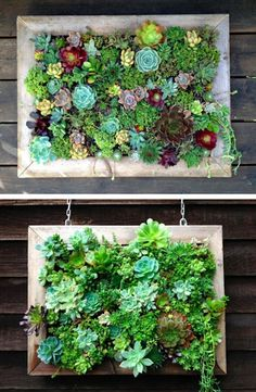 39 Insanely Cool Vertical Gardens Succulent collage