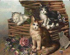 basket full of kittens