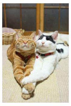Estiramiento gatuno durante abrazo jeje