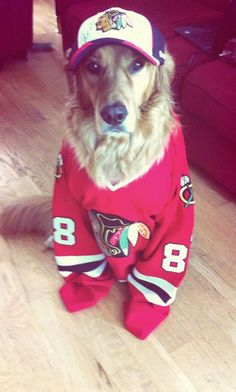 Winston is serious about his love for the #Blackhawks. #HockeyPets