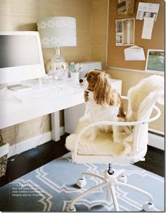 Home office. The King Charles spaniel is an essential accessory :-)