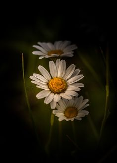 Photograph Leap Of Faith by Paul Barson on 500px