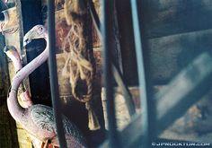 Barn Birds by JProcktorPhotography on Etsy Barn, Etsy, Warehouse, Barns, Shed