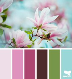 magnolia hues Color Palette by Design Seeds Spring Color Palette, Colour Pallette, Color Palate, Spring Colors, Colour Schemes, Color Combos, Color Patterns, Pink Palette, Design Seeds