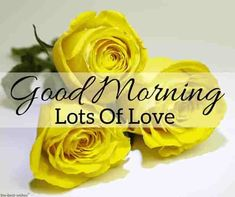 Looking for best Good Morning Wishes and Images with Rose? Check out our collection of beautiful HD Images, Pictures and Pics to send to your loved ones and spread a smile on their faces. Good Morning Beautiful Gif, Good Morning Roses, Good Morning Picture, Good Morning Good Night, Morning Pictures, Morning Msg, Happy Morning, Good Morning Wishes Friends, Good Morning Quotes For Him