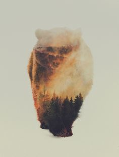 Double Exposure Animal Portraits by Andreas Lie