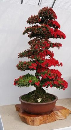 Bonsai Florido