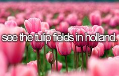Visit the Tulip Fields in Holland | Bucket List