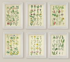 Hey, I found this really awesome Etsy listing at https://www.etsy.com/listing/276569716/set-of-6-botanical-prints-gallery-wall