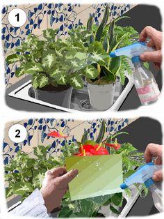 cache pots et aeonium arboreum truffaut d coration pinterest plante interieur truffaut. Black Bedroom Furniture Sets. Home Design Ideas