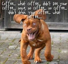LOOKS LIKE A COFFEE FIT FOR SURE!!!! YUP THATS IT FOR SURE!! rofl!