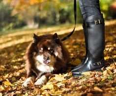 Wendy from Thank Fifi and Mr K. Mein Style, My Wish List, Hunters, Hunter Boots, Travel Style, Rubber Rain Boots, Style Me, Style Inspiration, Autumn
