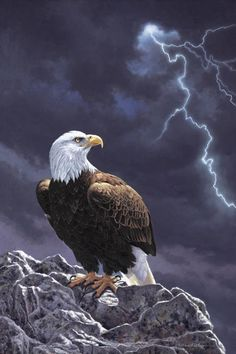 American Bald Eagle - Painting